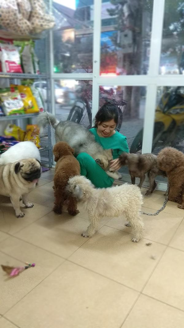 các dịch vụ thú cưng dành cho chó mèo tại vinh