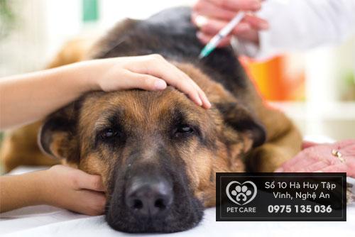 dịch vụ khám và chữa bệnh chó mèo