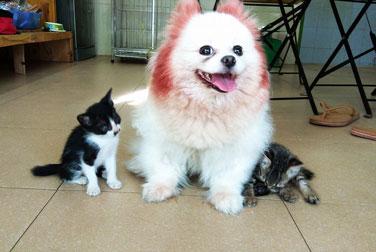 petcare đầy đủ các dịch vụ tốt nhất cho chó mèo