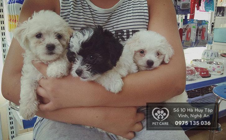 Những chú chó nhỏ nhắn, dễ nuôi và dễ gần