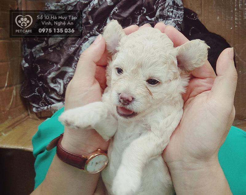 Cún cưng khỏe mạnh, người nuôi mới thật sự yên tâm