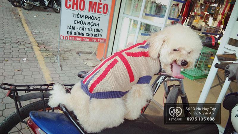 Chăm chó mới đẻ vào mùa đông cần nhiều kinh nghiệm