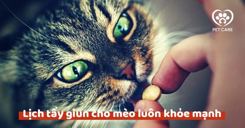 Lịch tẩy giun cho mèo luôn khỏe mạnh