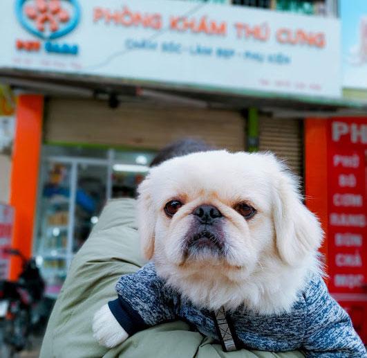 Sau khi sơ cứu nếu chó không khỏi, cần đưa tới các phòng khám thú y