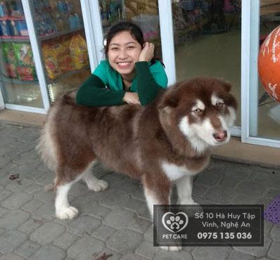 Chó có khả năng hấp thu nhiệt cao nên dễ bị sốc nhiệt, đặc biệt là các giống lông dài và dày