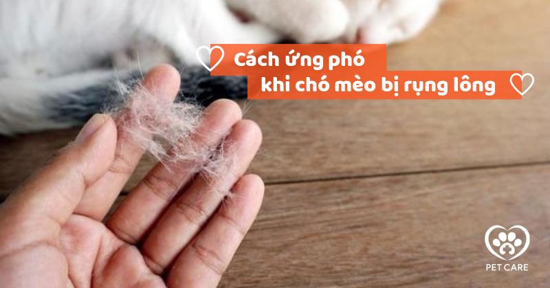 Cách ứng phó khi chó mèo bị rụng lông nhiều