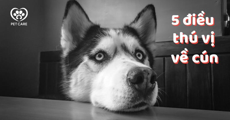 5 điều thú vị về cún có thể bạn đã biết