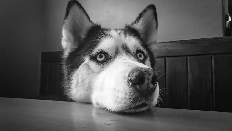 nuôi cún có lợi cho sức khỏe của con người