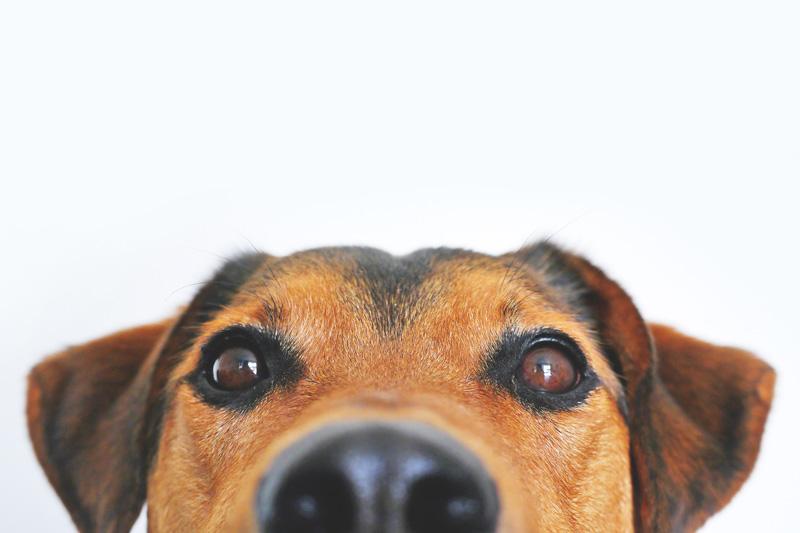 Những điều thú vị về cún mà có lẽ bạn chưa từng biết đến