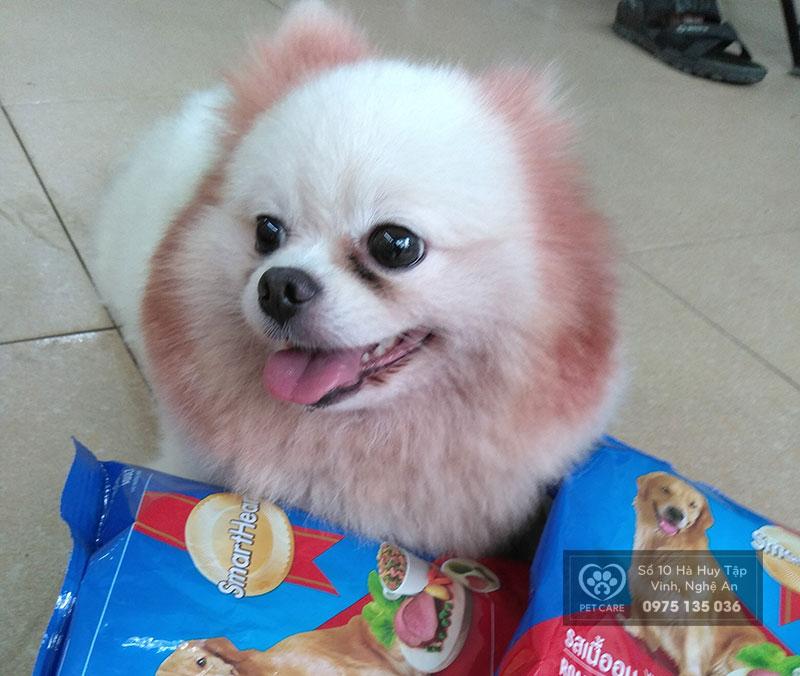 Lựa chọn thức ăn cho chó cưng