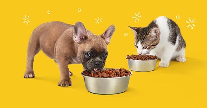 PetCare là địa chỉ đáng tin cậy mà bạn có thể yên tâm để lựa chọn thức ăn.