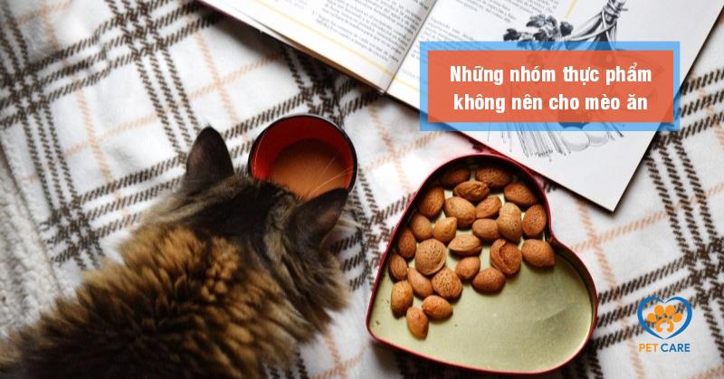 Những nhóm thực phẩm không nên cho mèo ăn