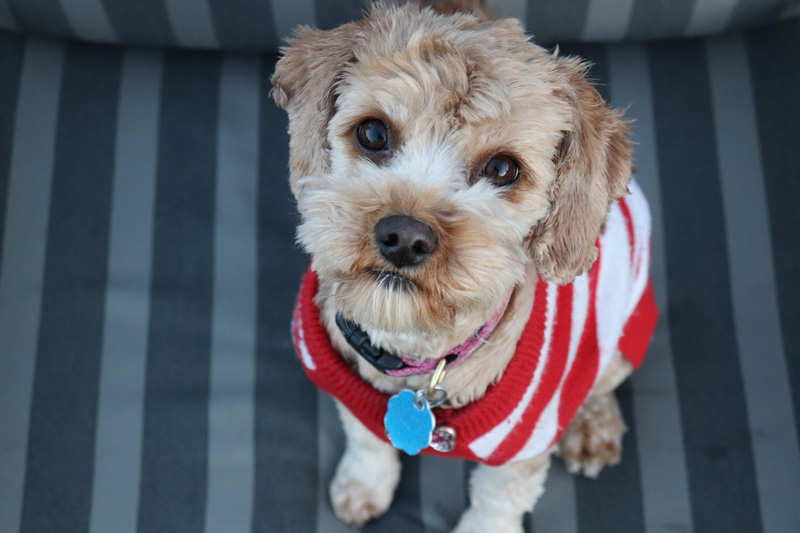 Quần áo cho chó đa dạng mẫu mã