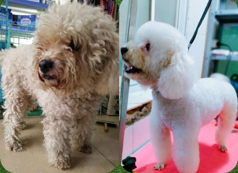 Chó cưng của bạn sẽ trở nên đẹp hơn