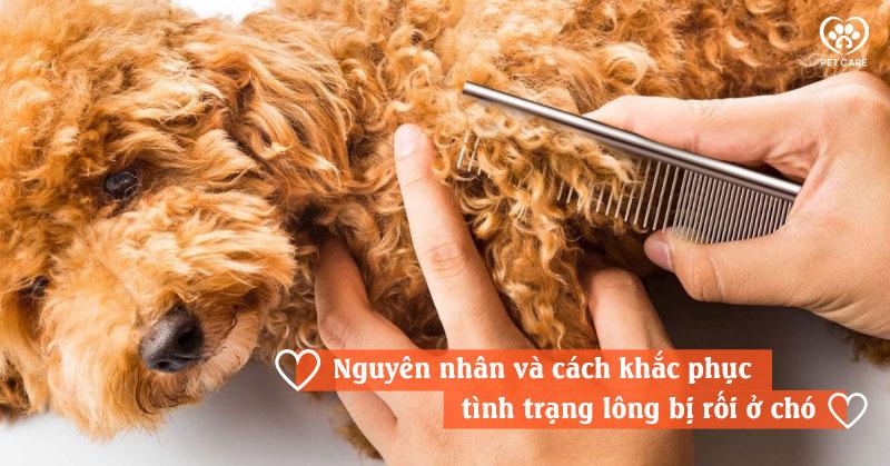 Nguyên nhân và cách khắc phục tình trạng lông bị rối ở chó