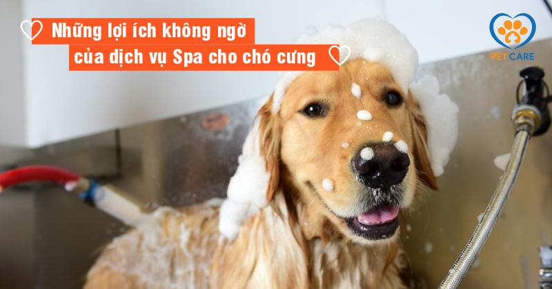 Những lợi ích không ngờ của dịch vụ Spa cho chó cưng