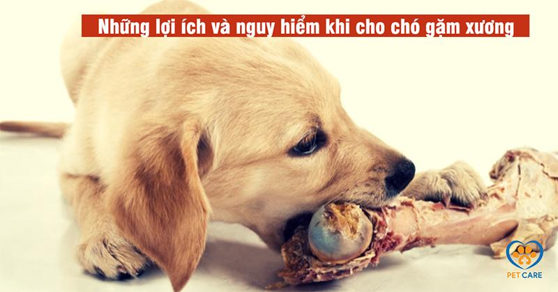 Những lợi ích và nguy hiểm khi cho chó gặm xương