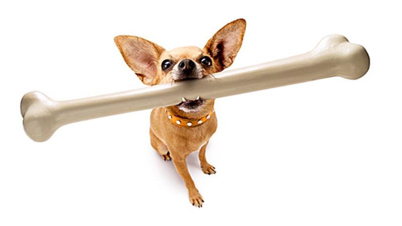 Gặm xương đúng cách sẽ giúp răng miệng của chó được chắc khỏe hơn