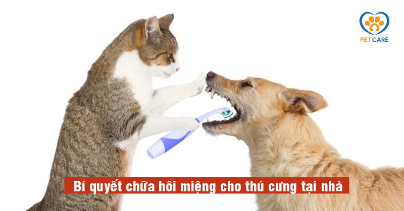 Bí quyết chữa hôi miệng cho thú cưng tại nhà