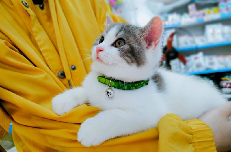 Bạn sẽ nhận được lòng trung thành và sự thân thiết đáng nể của những chú mèo.