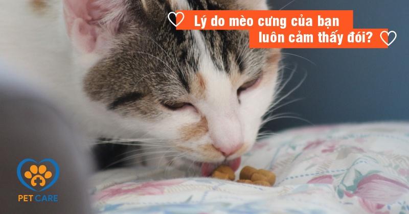 Lý do mèo cưng của bạn luôn cảm thấy đói?