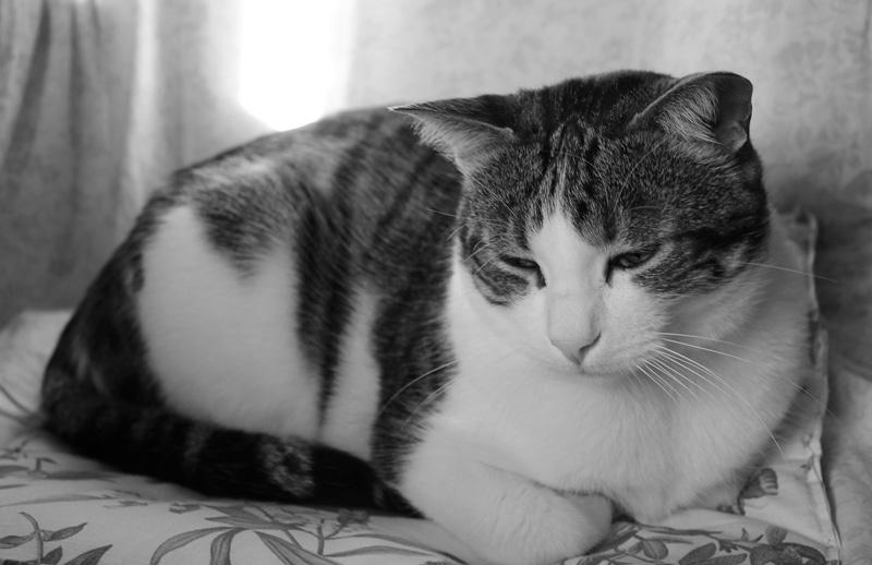 sự lão hóa cũng có thể khiến một con mèo luôn cảm thấy đói