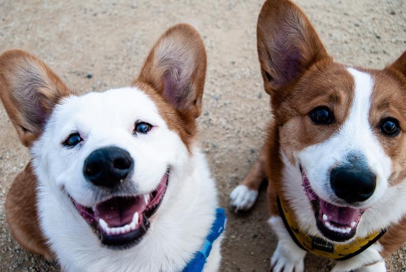 Hàm răng rất quan trọng với sức khỏe của chó cưng