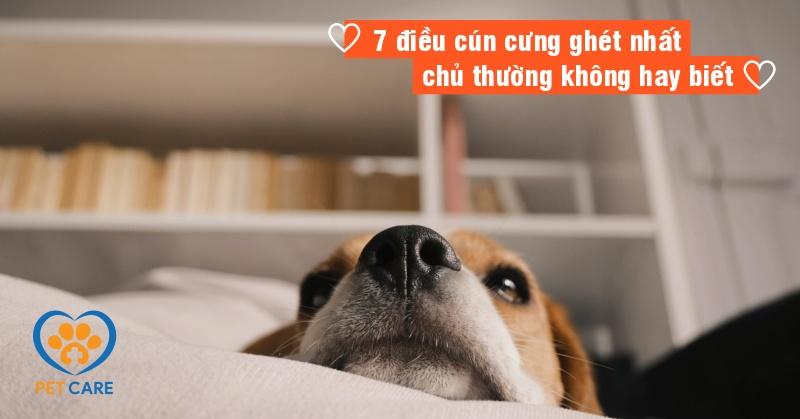 7 điều cún cưng ghét nhất chủ thường không hay biết