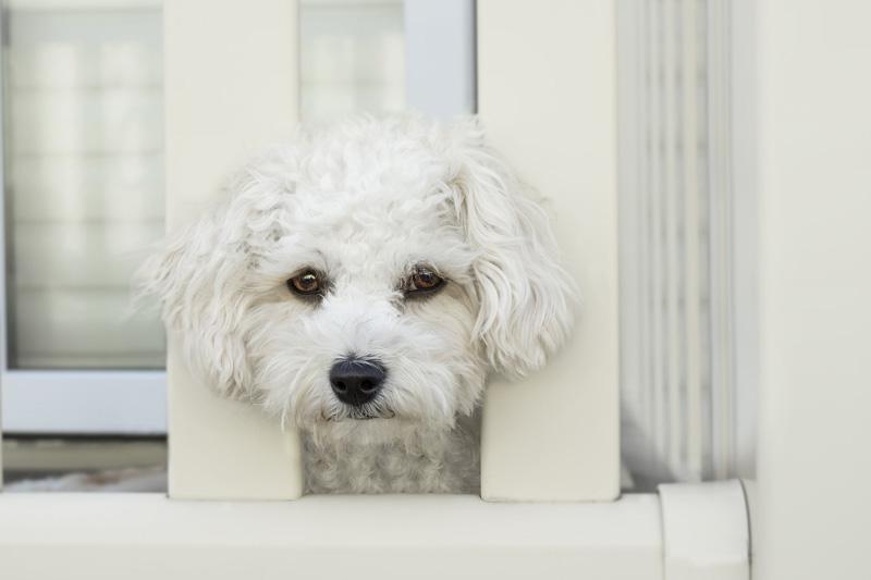 Chó không thích bị bỏ rơi một mình