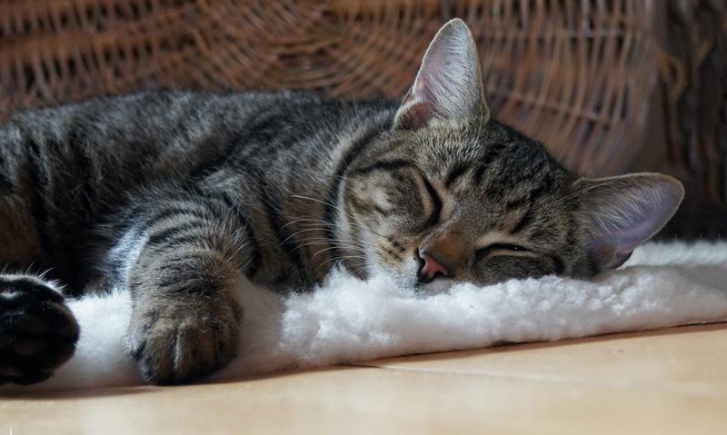 Nuôi thú cưng chọn nuôi chó hay nuôi mèo?