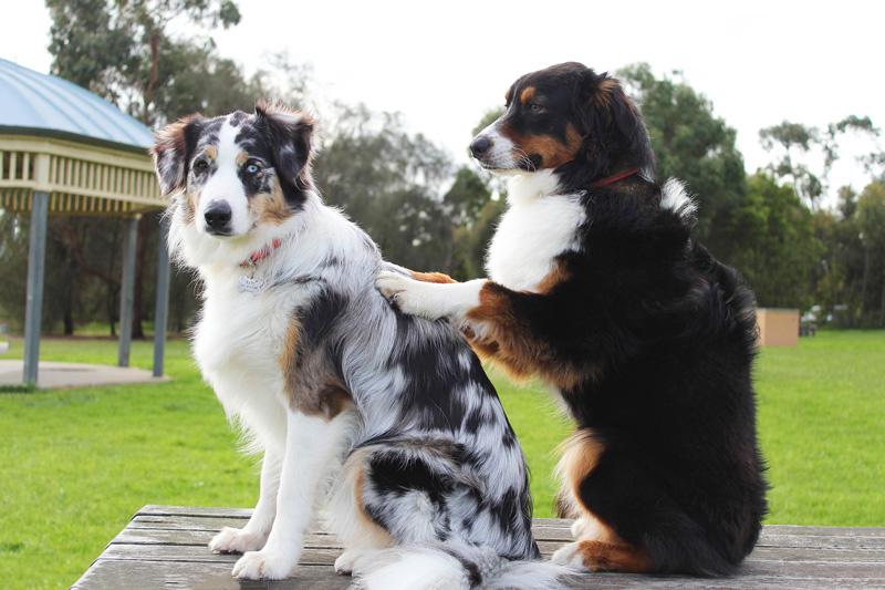 Mát xa là một phương thuốc tự nhiên chữa viêm khớp chó