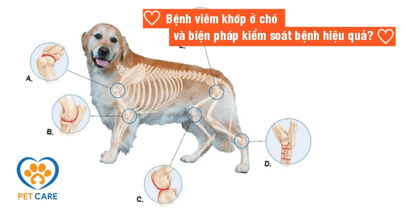 Bệnh viêm khớp ở chó và các biện pháp kiểm soát bệnh hiệu quả?