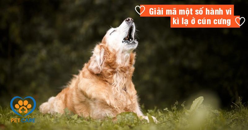 Giải mã một số hành vi kì lạ ở cún cưng
