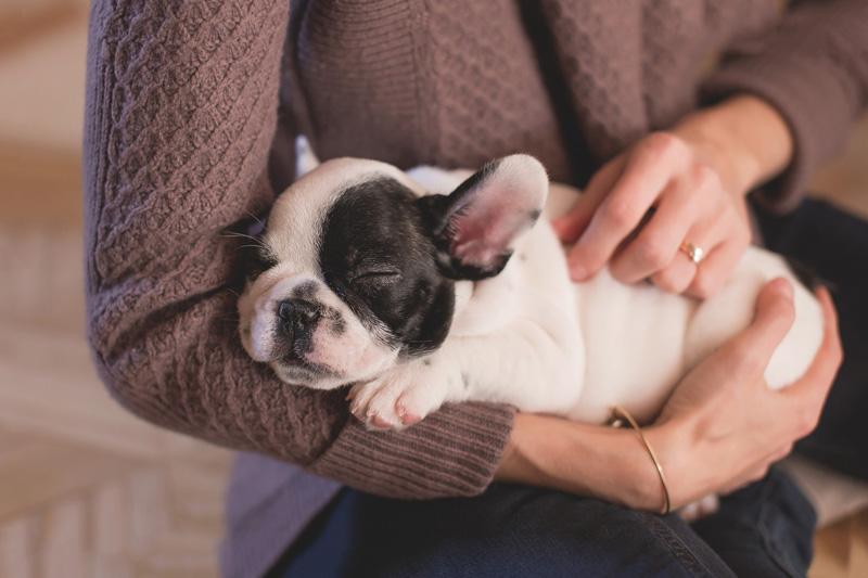 Kỹ thuật chăm sóc chó con cho người bắt đầu nuôi