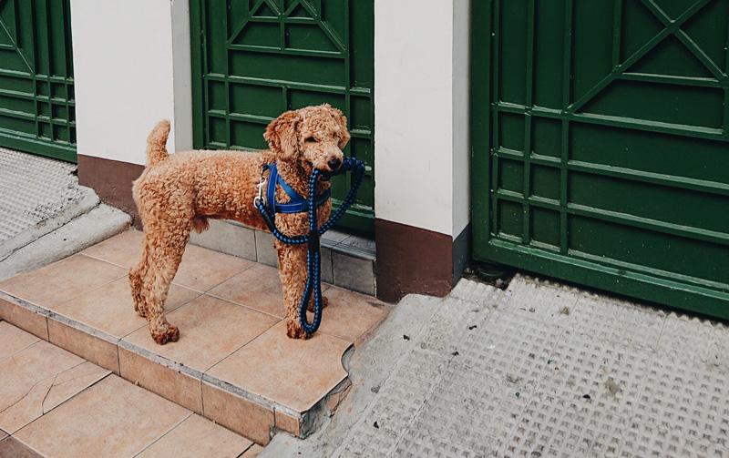 đừng để chó sống một mình bên ngoài