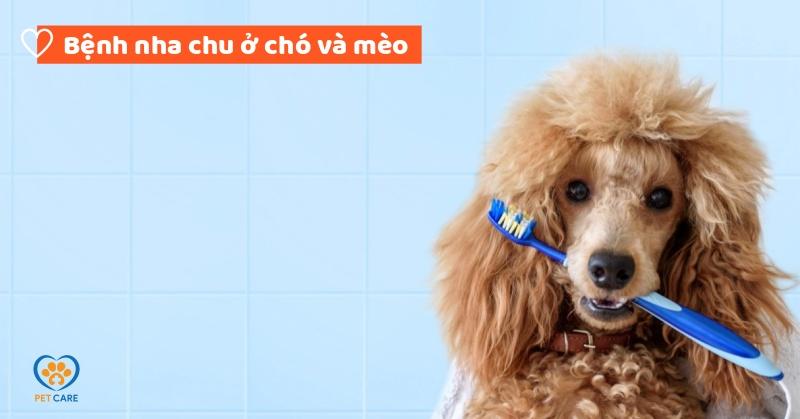 Bệnh nha chu ở chó và mèo