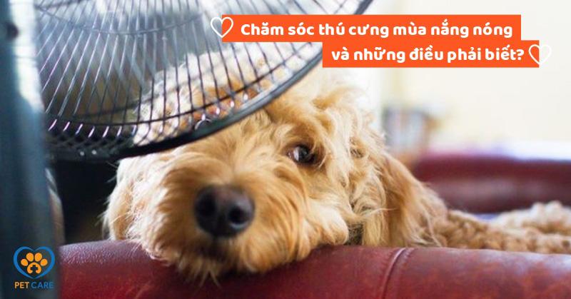 Chăm sóc thú cưng mùa nắng nóng và những điều phải biết?