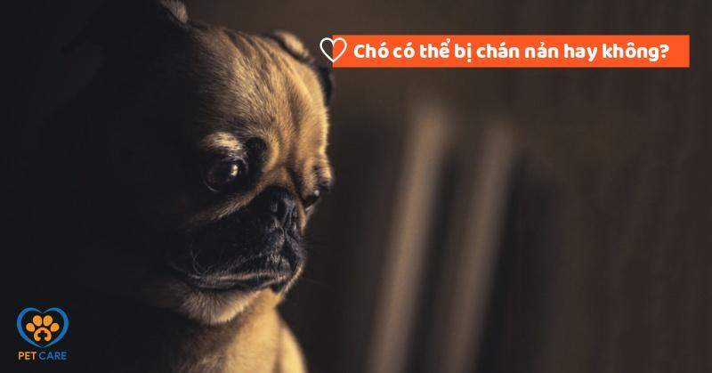 Chó có thể bị chán nản hay không?