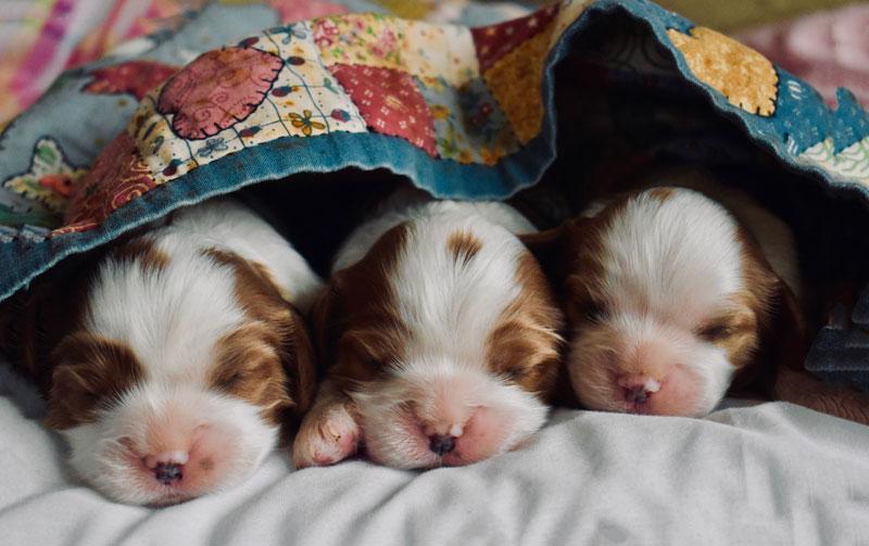 10 lời khuyên bổ ích dành cho người mới nuôi chó lần đầu