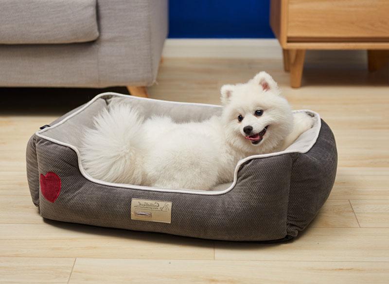 Cần có chỗ ngủ lí tưởng cho chú chó của bạn.