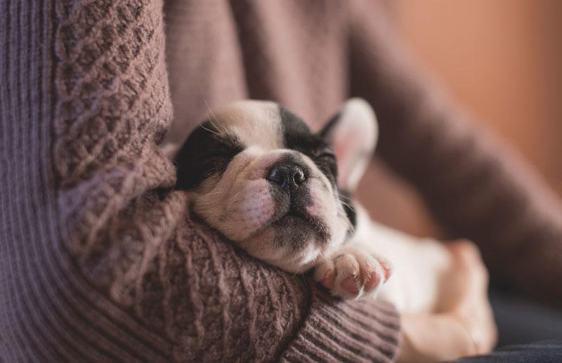 Học tính kiên nhẫn trước khi bạn quyết định nuôi chó.