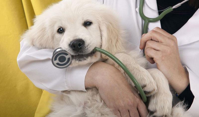 Ghi nhớ chi tiết thời gian tẩy giun cho cún yên