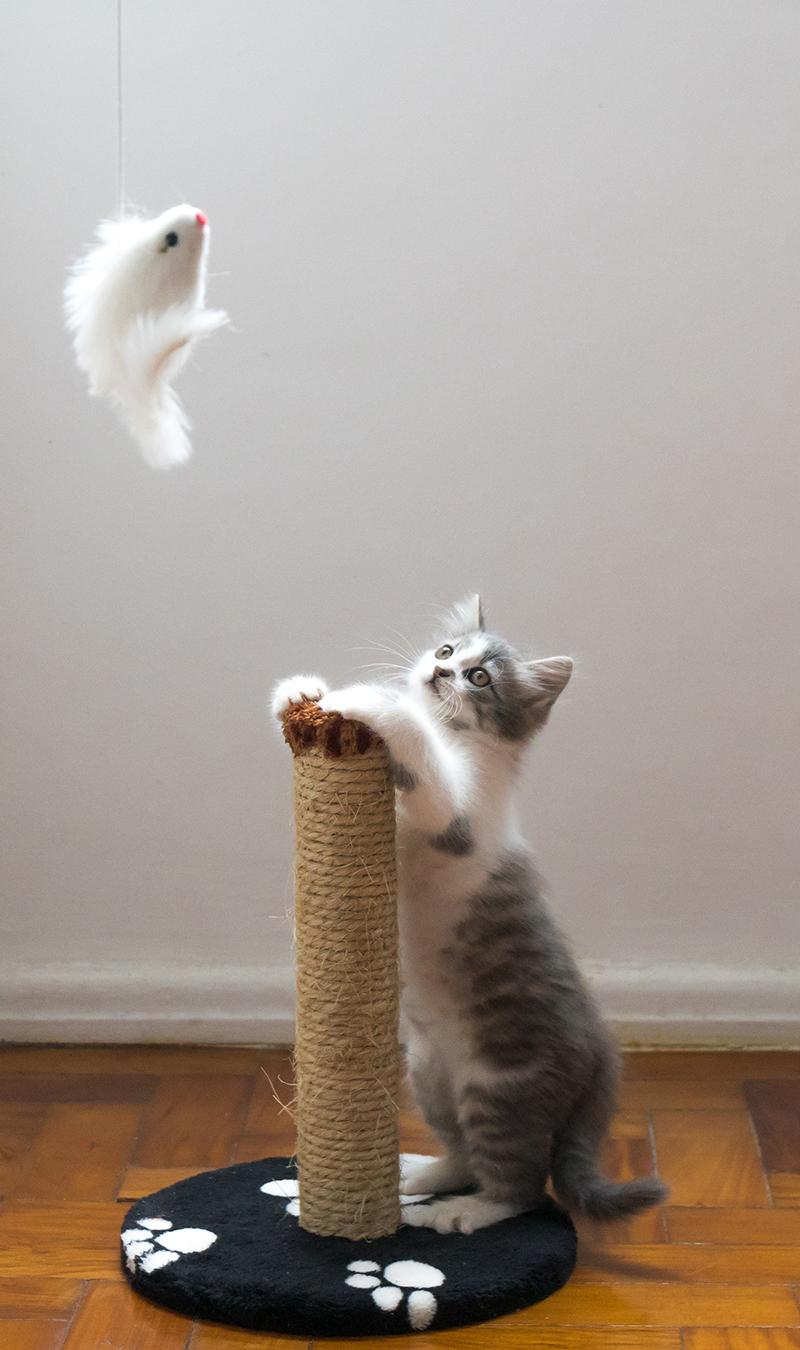 Sử dụng đồ chơi cho mèo, không phải tay