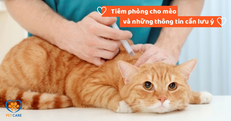 Tiêm phòng cho mèo và những thông tin cần lưu ý