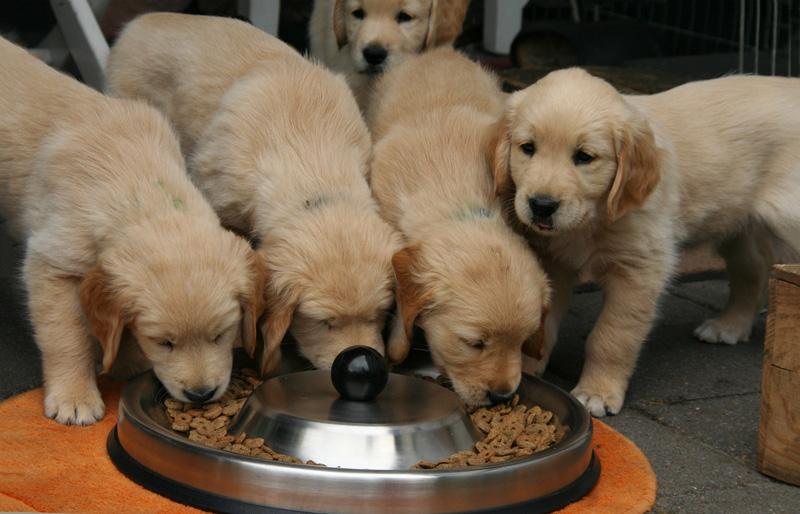 Vì sao bạn phải bỏ tiền ra để mua thức ăn cho thú cưng?