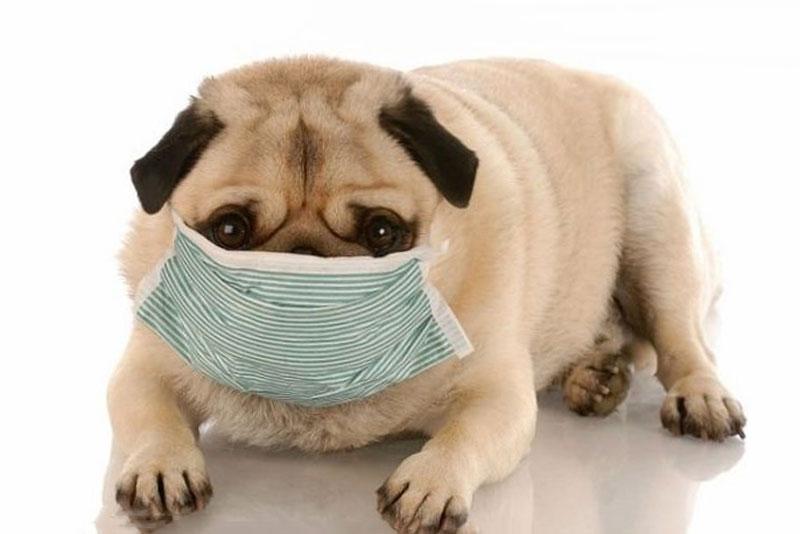 Corona virus và vật nuôi - Giải đáp một số thắc mắc thường gặp