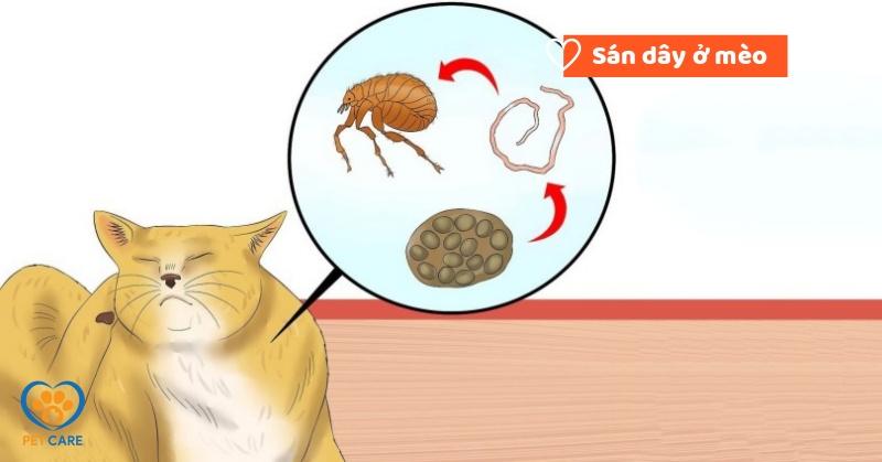 Sán dây ở mèo : Nguyên nhân, triệu chứng và cách điều trị