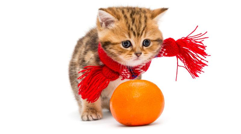 Trị ve rận cho chó mèo bằng vỏ cam, vỏ chanh