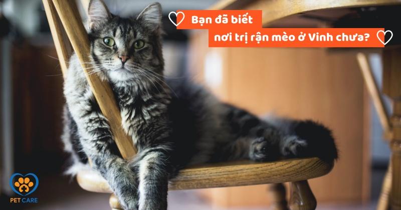Bạn đã biết nơi trị rận mèo ở Vinh uy tín chưa?