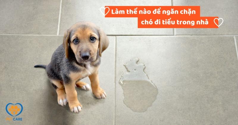 Làm thế nào để ngăn chặn chó đi tiểu trong nhà